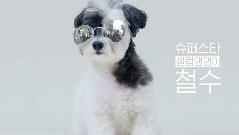셀럽댕댕 철수&레드 영상
